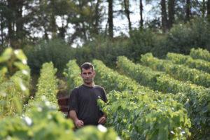 Champagne Soret Devaux travail dans les vignes
